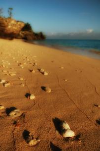 砂浜の写真素材 [FYI00457056]
