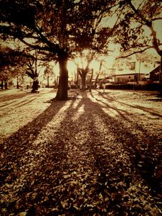 夕暮れに木影を伸ばしての写真素材 [FYI00457192]
