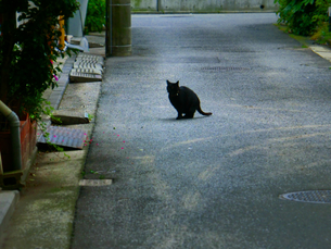野良ネコのいる風景の写真素材 [FYI00457197]