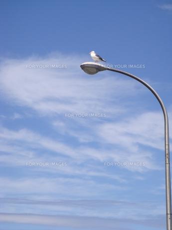 見張り台に立つとりの写真素材 [FYI00457334]