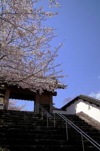 掛川城の桜の写真素材 [FYI00457399]
