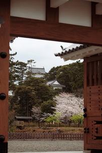 小田原城の写真素材 [FYI00457401]