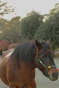 馬の写真素材 [FYI00457440]