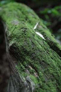 苔の写真素材 [FYI00457452]