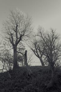 立木の写真素材 [FYI00457464]
