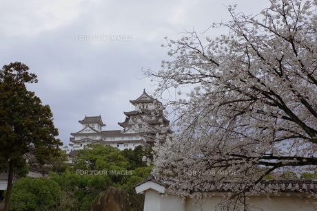 姫路城の写真素材 [FYI00457482]