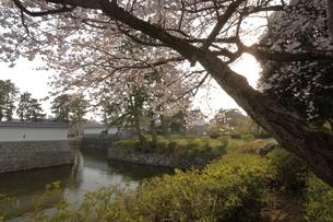 小田原城の桜の写真素材 [FYI00457483]