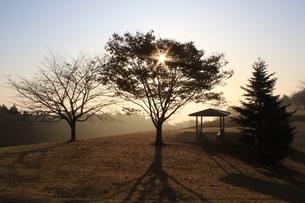朝日と木立の写真素材 [FYI00457614]