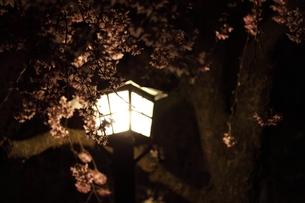 桜と街灯の写真素材 [FYI00457618]