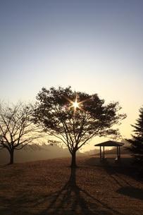 朝日と木立の写真素材 [FYI00457626]