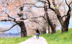 女性と桜の写真素材 [FYI00457643]