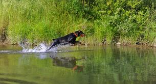 水遊びの写真素材 [FYI00457755]