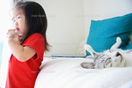 女の子と猫の素材 [FYI00457791]