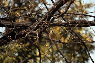 樹上の小鳥の素材 [FYI00457997]