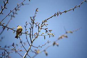 枝の小鳥の素材 [FYI00458028]