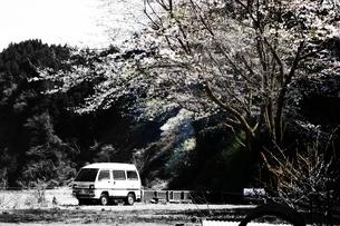 1本の桜と捨てられた車の写真素材 [FYI00458067]