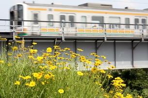 走る電車と黄色い花の写真素材 [FYI00458201]