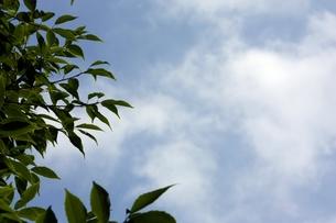 梅雨の晴れ間と木の葉の写真素材 [FYI00458348]