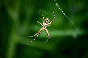 蜘蛛とクモの巣の写真素材 [FYI00458412]