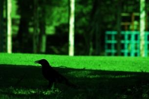 公園とカラスのシルエットの写真素材 [FYI00458562]