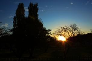 夕陽と木立のシルエットの素材 [FYI00458576]