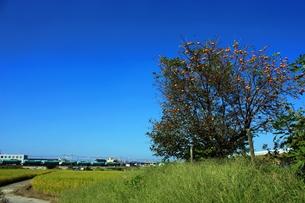 秋晴れの田園風景の写真素材 [FYI00458612]