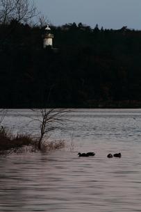 夜明け前の入鹿池の素材 [FYI00458680]
