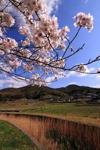 桜と田園風景の素材 [FYI00458793]