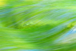 新緑を映す流れの写真素材 [FYI00459572]