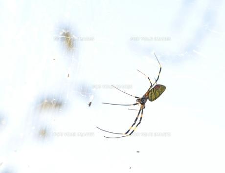 女郎蜘蛛2の写真素材 [FYI00459691]