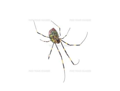 女郎蜘蛛7の写真素材 [FYI00459694]