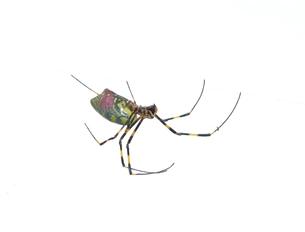 女郎蜘蛛6の写真素材 [FYI00459699]