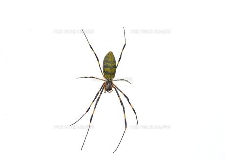 女郎蜘蛛5の写真素材 [FYI00459703]