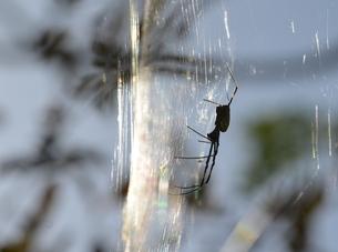 女郎蜘蛛4の写真素材 [FYI00459704]