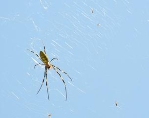 女郎蜘蛛3の写真素材 [FYI00459707]