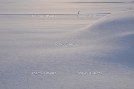 雪の素材 [FYI00460694]