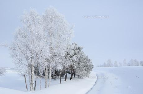 雪をかぶった木々の素材 [FYI00460702]