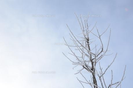 木と雪の素材 [FYI00460709]