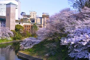 東京の桜の写真素材 [FYI00460863]
