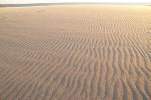 砂丘の素材 [FYI00460879]