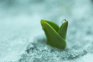 なごり雪の写真素材 [FYI00461108]