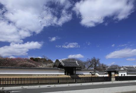 水戸 弘道館 中央の正門および附塀(白塀)は国指定重要文化財の写真素材 [FYI00461290]