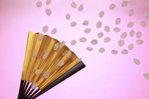 桜 扇子から花吹雪 背景イメージの写真素材 [FYI00461321]