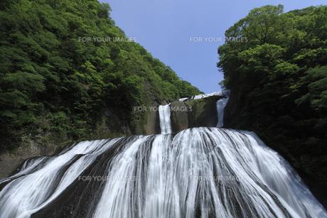 袋田の滝 新緑と青空 白い水の流れ 大雨の翌日撮影 水量多しの写真素材 [FYI00461332]