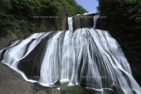 袋田の滝 新緑と青空 白い水の流れ 大雨の翌日撮影 水量多しの写真素材 [FYI00461335]