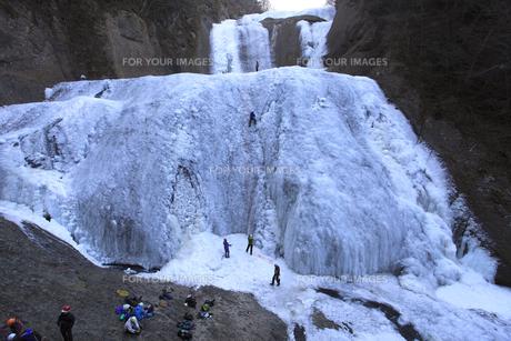 滝登り 雄大な袋田の滝 アイスクライミング その氷壁を登るの写真素材 [FYI00461347]
