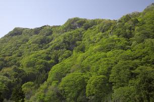新緑の鞍掛山 奥久慈渓谷ハイキング 袋田の滝付近の写真素材 [FYI00461377]