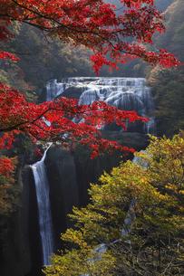 袋田の滝 紅葉 第2観瀑台から望むの写真素材 [FYI00461449]
