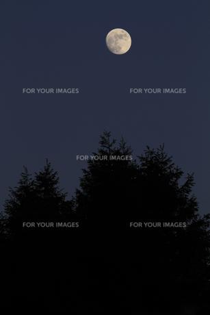 十三夜の月 栗名月 豆名月 後の月 小麦の名月 無双の写真素材 [FYI00461454]