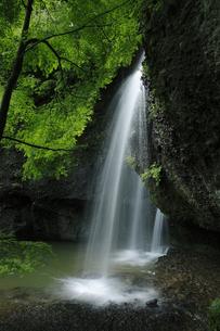 青葉が目にしみる 月待の滝 裏見の滝 くぐり滝の写真素材 [FYI00461461]